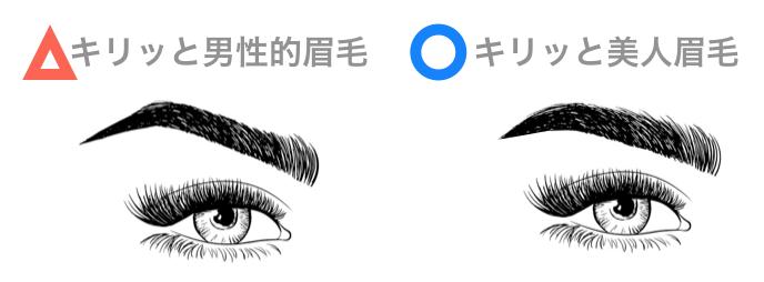 女性の眉毛「キリッと男性的眉毛・キリッと美人眉毛」